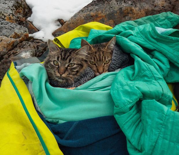 macska kirándulás kalandor kajak túra