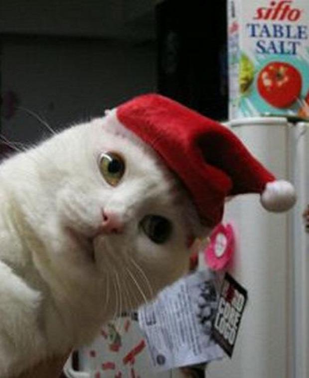 karácsony mikulás sapka