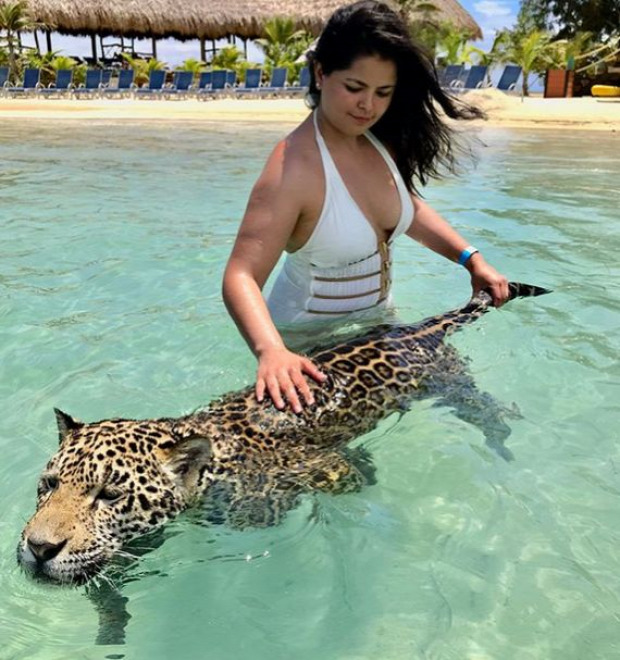 jaguár fürdés