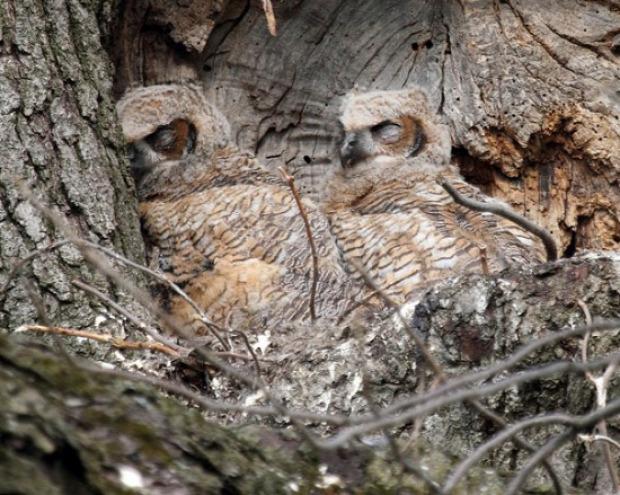 A világ érdekes madár kamuflázs rejtőzik álca