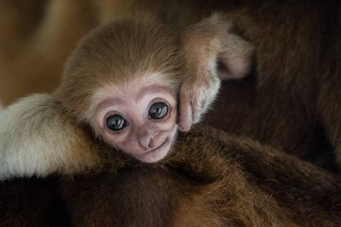 állat szülő gyermek kapcsolat