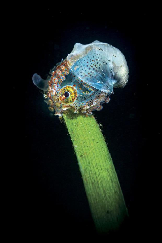 vízalatti fotó verseny győztes