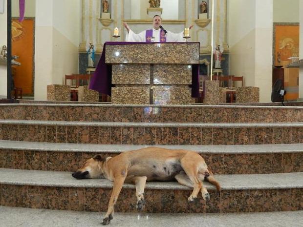 A világ érdekes Brazília pap templom kutya kóbor