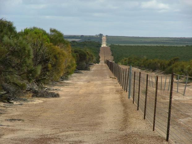 Ausztrália nyúl ökológiai katasztrófa