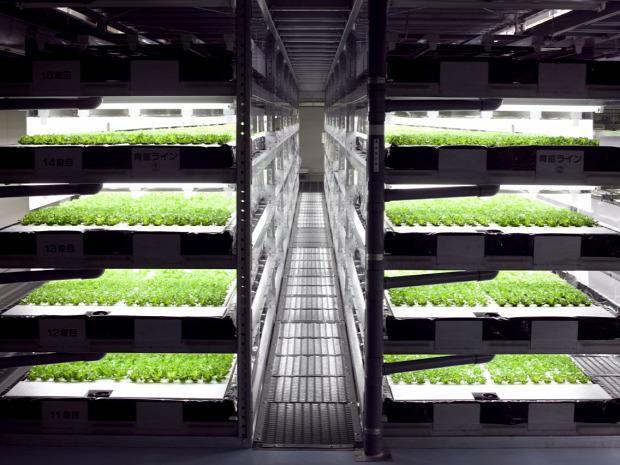 mezőgazdaság termelés saláta nagyüzem robotizált