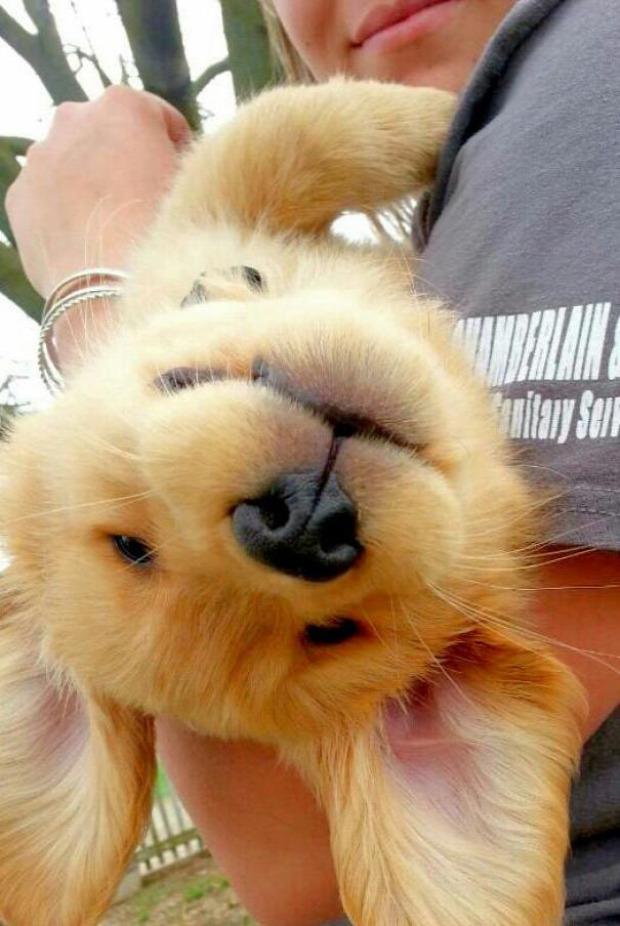 A világ érdekes  kutya kölyök