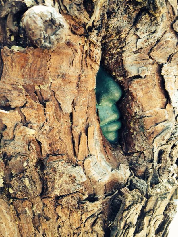 A világ érdekes fa életerő