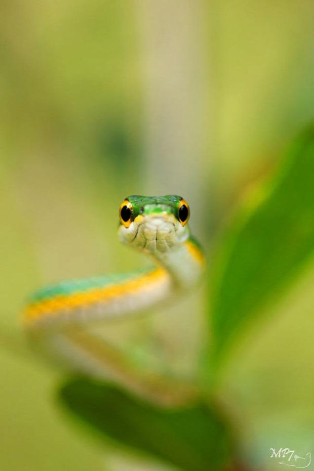 A világ érdekes kígyó