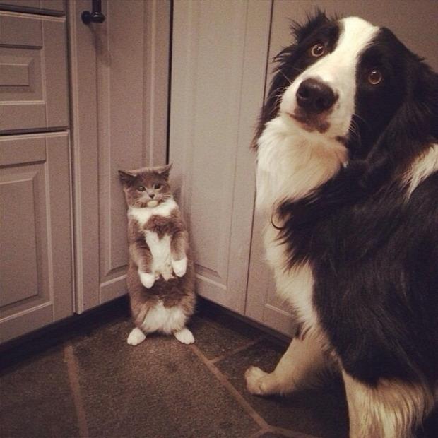 A világ érdekes állat kutya macska rajtakapott