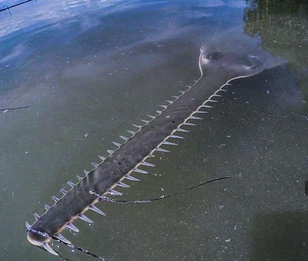 A világ érdekes természet állat ijesztő rémisztő