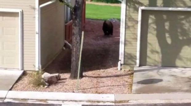 A világ érdekes Colorado Springs csatorna medve maci mackó
