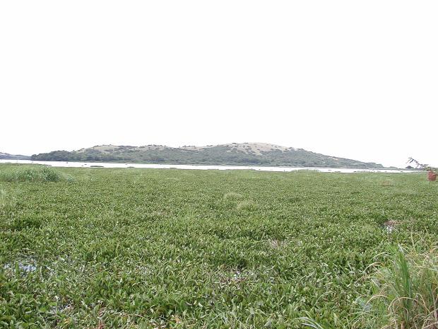 A világ érdekes katasztrófa ökológiai nílusi sügér vizi jácint Viktória-tó