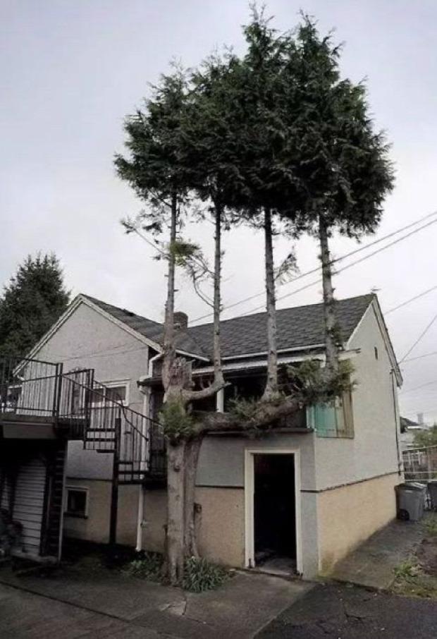 A világ érdekes fa erő élet túlélés szikla beton
