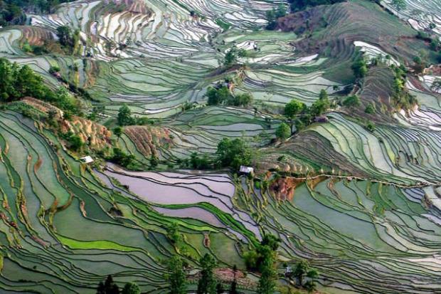 A világ érdekes Kína rízsföld Jüanjang Yuanyang  terasz rízsterasz