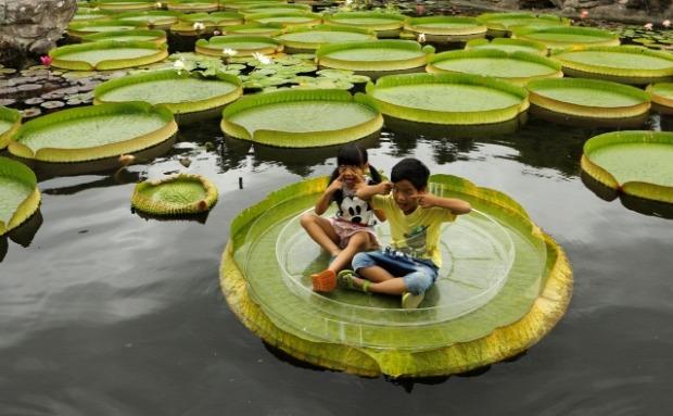 Tajvan Tajpej viziliiom óriás