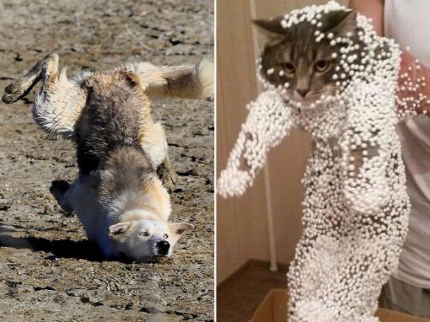 A világ érdekes állat hibázik baleset