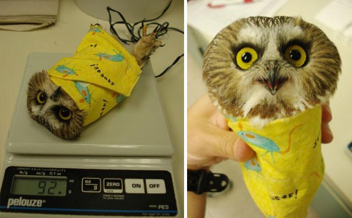 orvos állatorvos állat súly mérés