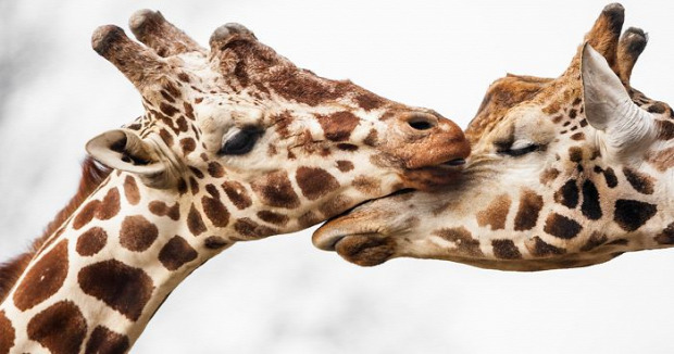 A világ érdekes állat szeretet kapcsolat