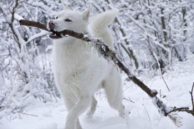 kutya hó