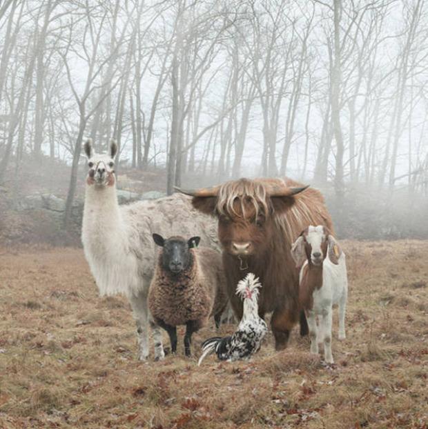 A világ érdekes fotó póz pózol állat