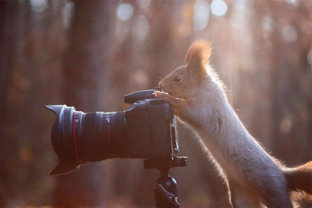 A világ érdekes állat fényképezés
