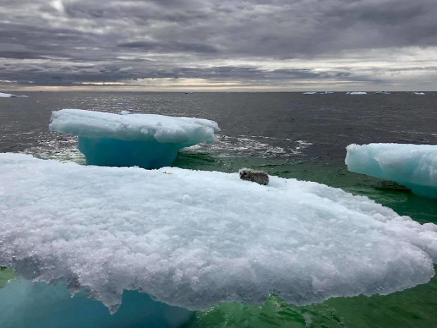 A világ érdekes jéghegy sarki róka mentés rákhalász hajó