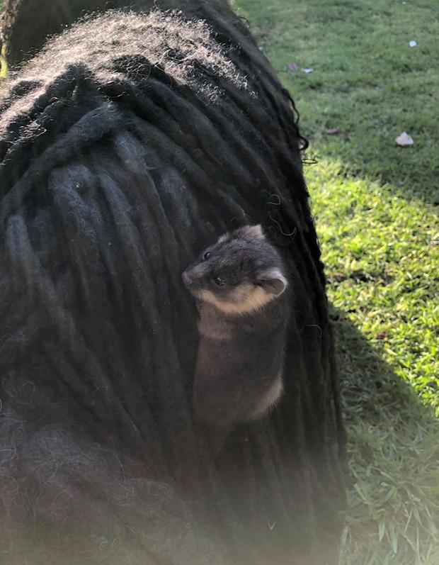a világ érdekes kutya oposszum erszényes gyűrűsfarkú