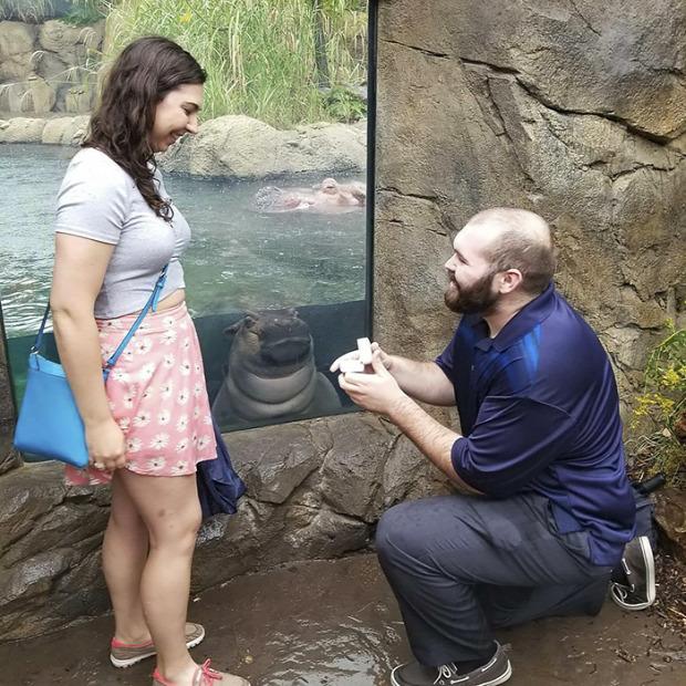 A világ érdekes romantika állat  esküvő lánykérés