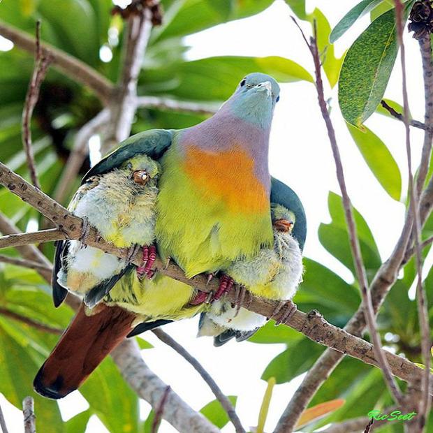 A világ érdekes állatok anya csemete fia