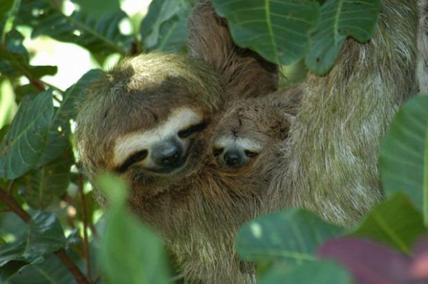 A világ érdekes állatok anya csemete