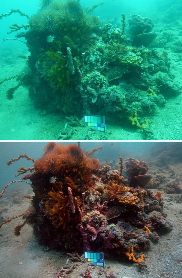 A világ érdekes tenger ócceán vízalatt fotó Szín helyes algoritmus