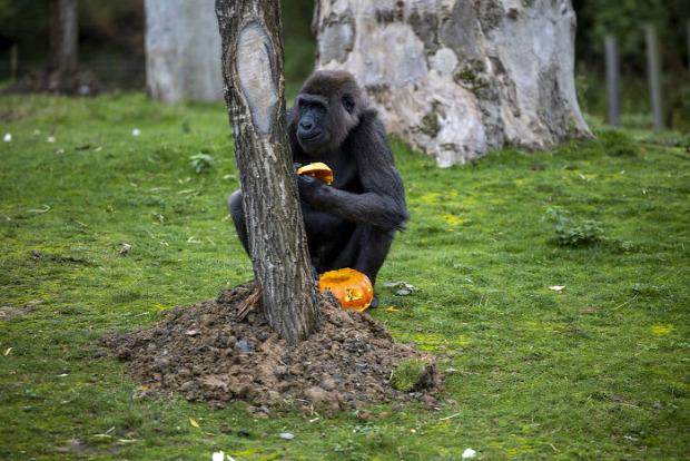Brüsszel állatpark lakoma halloween