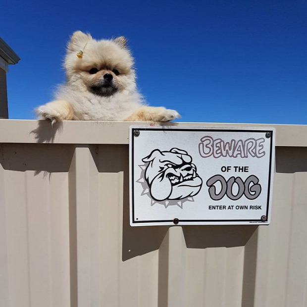 A világ érdekes kutya tábla figyelmeztetés