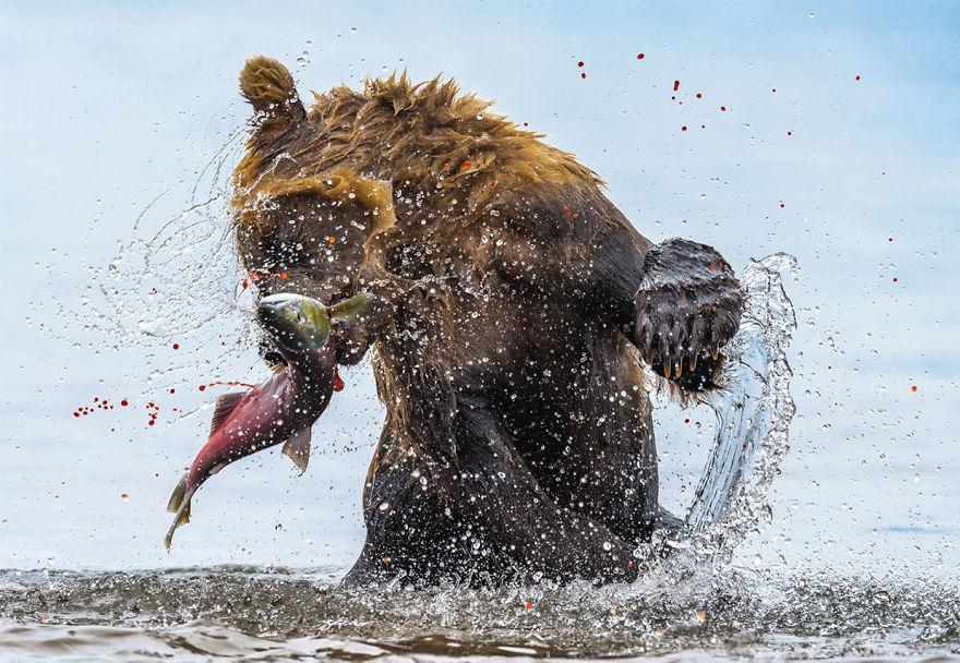 verseny fotó természet vadon
