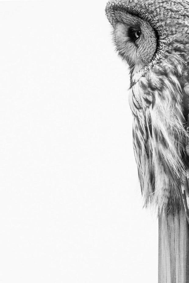 madár fotó
