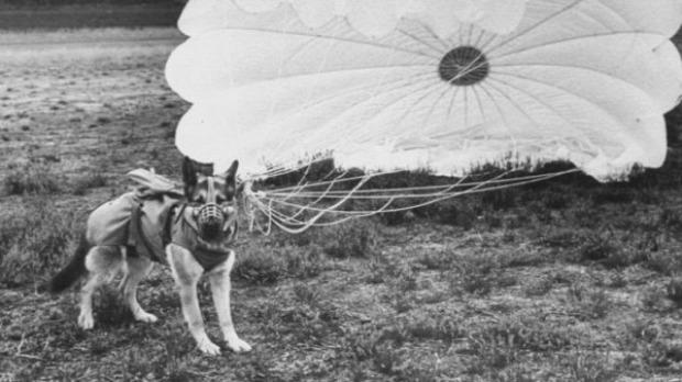 kutya világháború