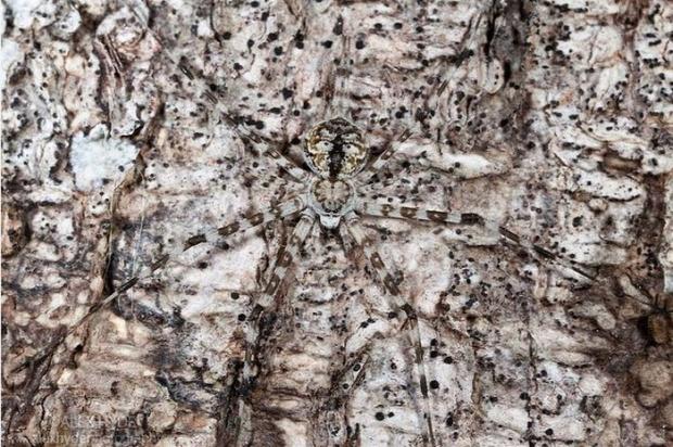 A világ érdekes rejtőzködés álcázás kamuflázs állat