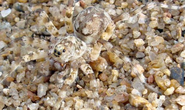 A világ érdekes állat mimikri rejtőzködés