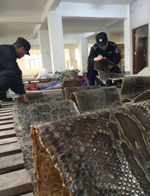 Isten állatkertje csempész Kína kígyó bőr piton