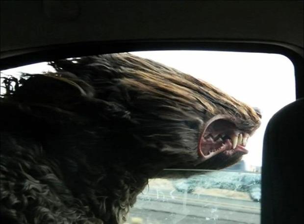 kutya autó