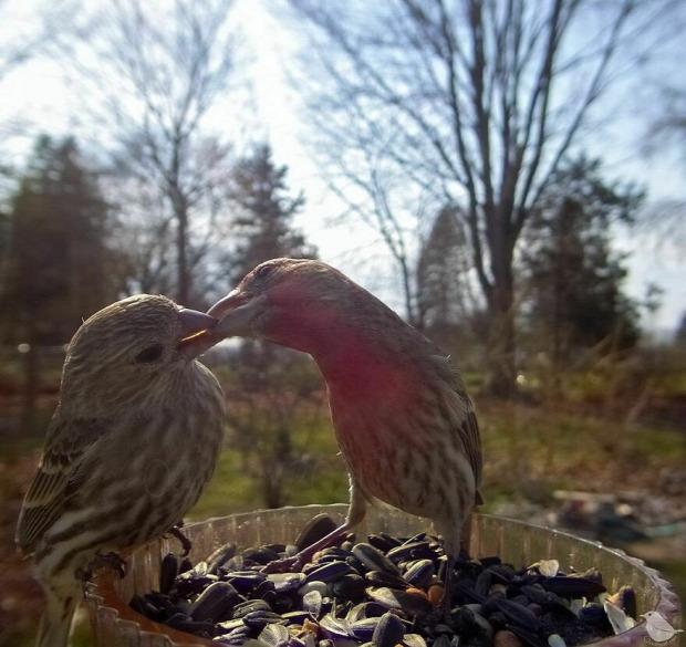 vadkamera madáretető madár mókus
