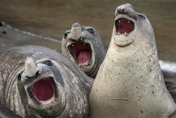 A világ érdekes természetfotó humoros fotó verseny