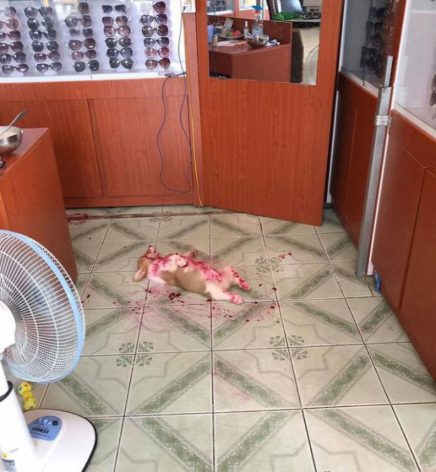corgi kölyök halott baleset happy end sárkánygyümölcs