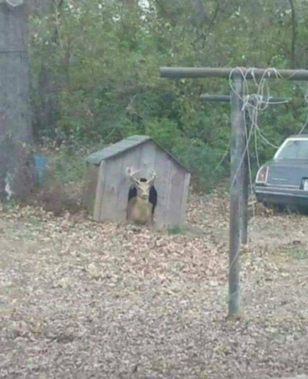 állat különös vicces furcsa