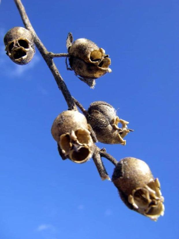 A világ érdekes növény virág rémisztő ijesztő
