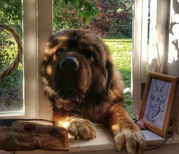 kutya hatalmas óriás