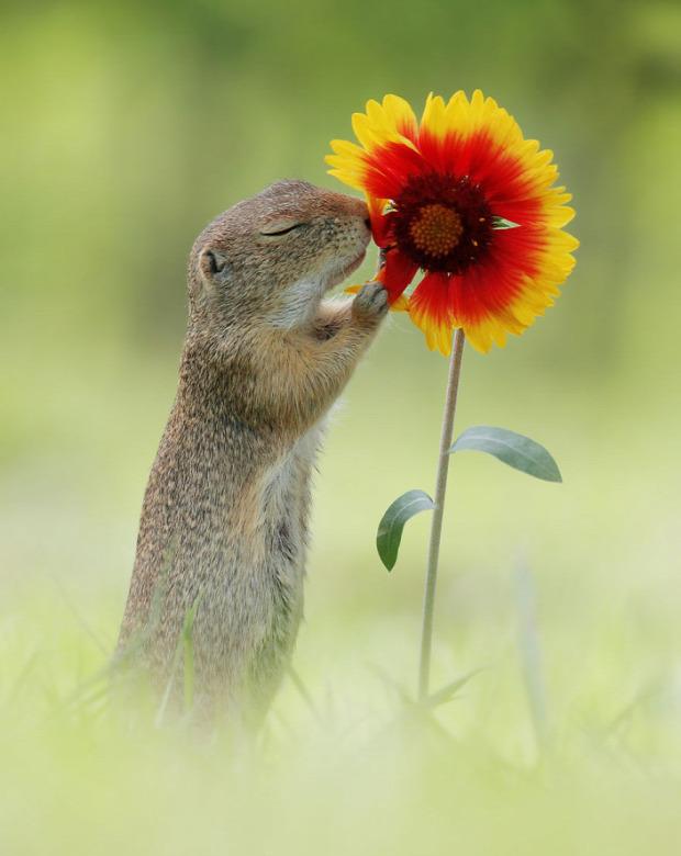 természetfotós Julian Sad mókus hörcsög róka