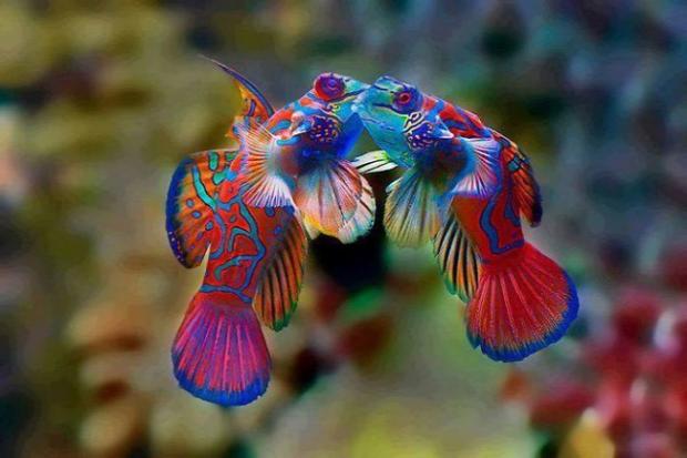 A világ érdekes állat színes szivárvány