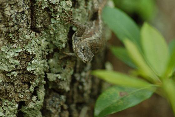 A világ érdekes rejtzködő állat elbújt mimikri