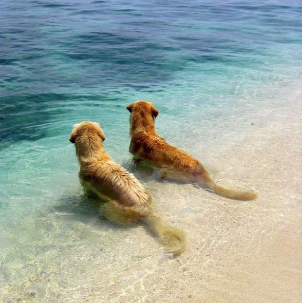 A világ érdekes kutya pár